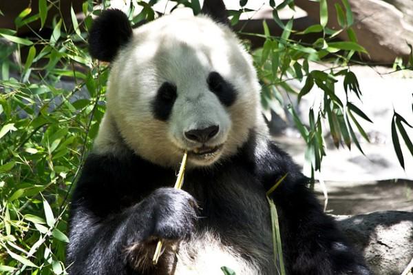 Google Panda ça fait mal :/